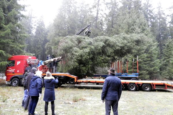 Weihnachtsbaum für Wilrijk