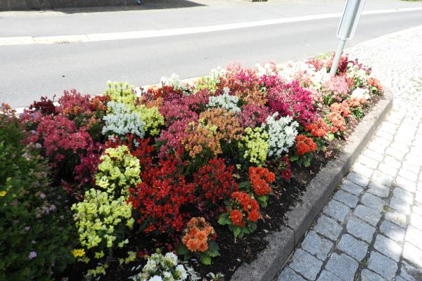 Blumenschmuck in Weywertz