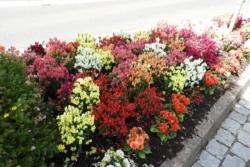 2020.06.29-Blumen-007