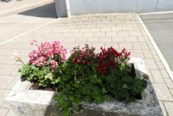 2020.06.29-Blumen-008