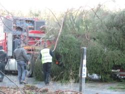 Baum-Wilrijk2013-017